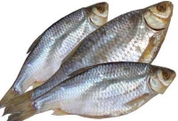 Сушеная рыба
