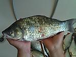 ,, Рыбка ,,